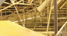 Céréales produites