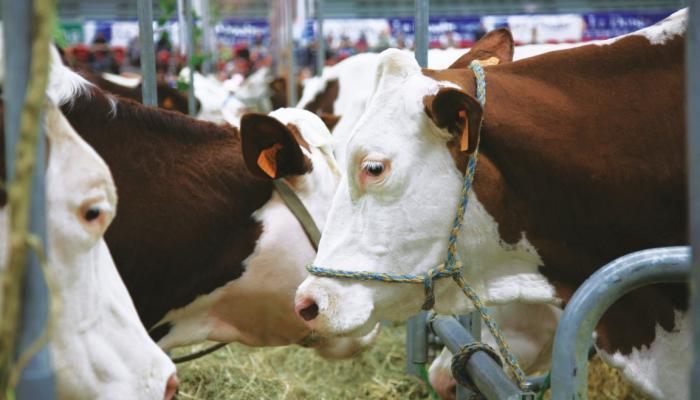 Activité nutrition animale
